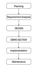 Phases In Database Development Process
